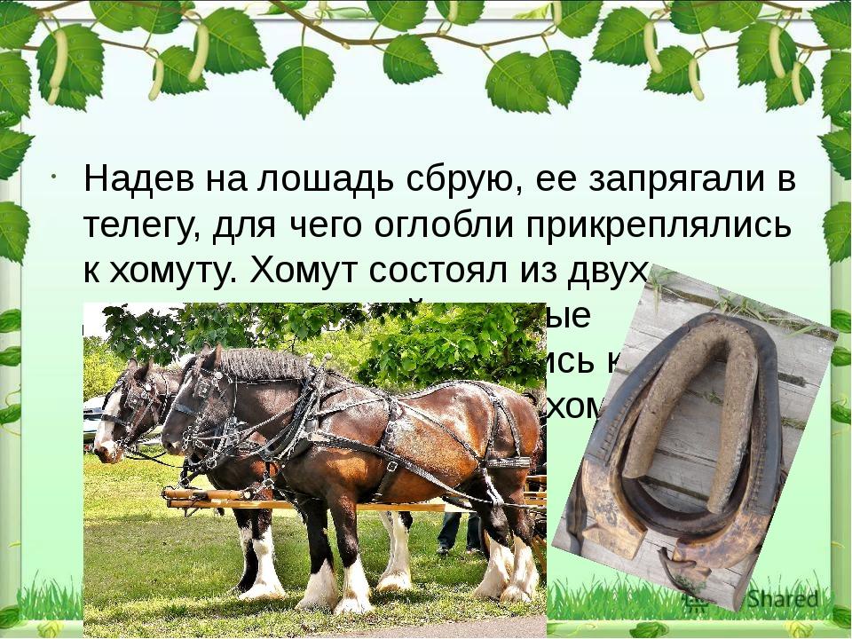 Надев на лошадь сбрую, ее запрягали в телегу, для чего оглобли прикреплялись...