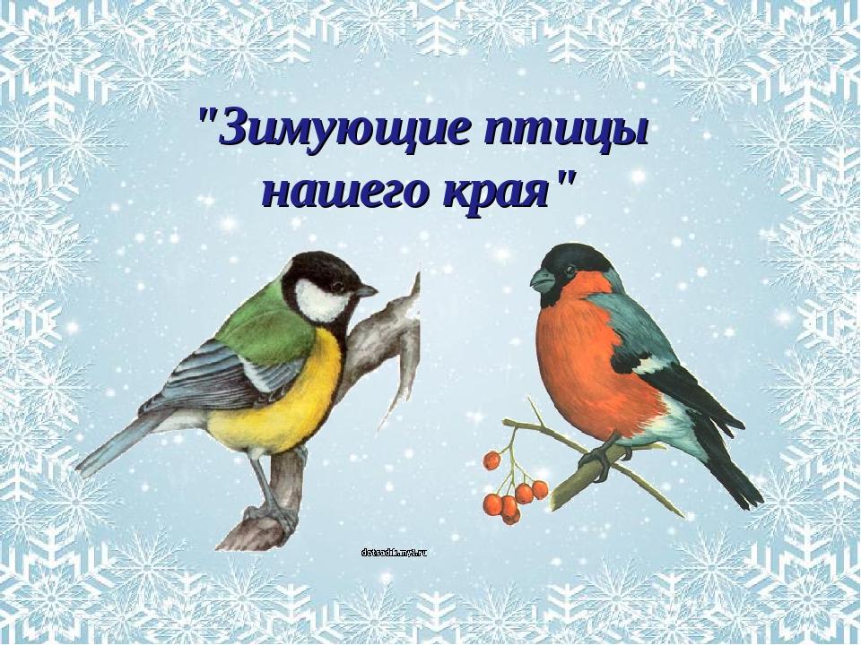 Зимующие птицы картинки с надписями
