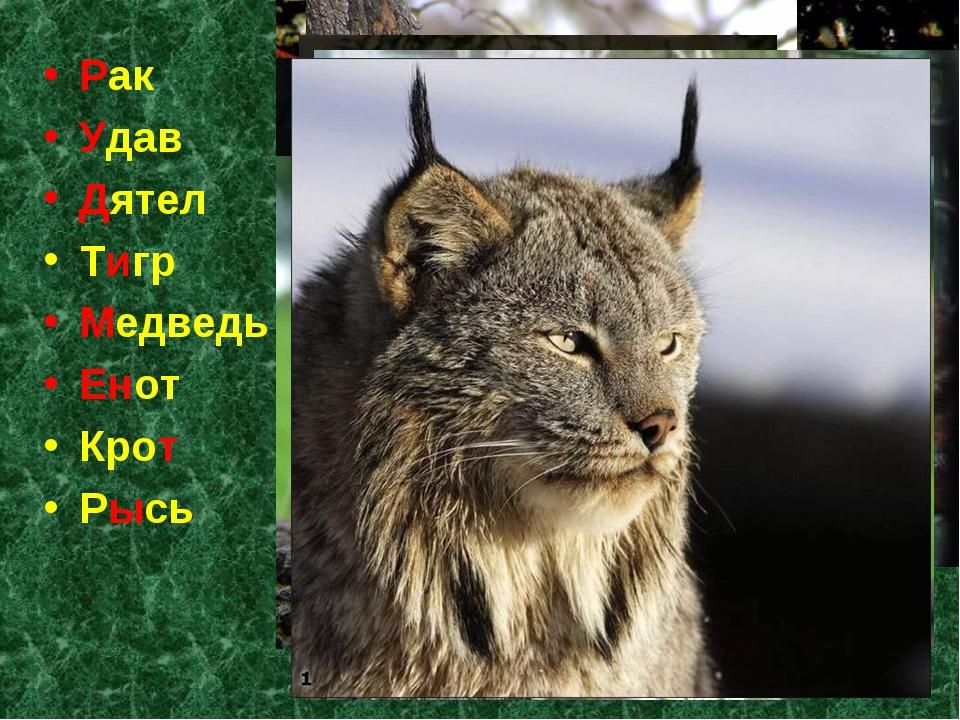 Рак Удав Дятел Тигр Медведь Енот Крот Рысь