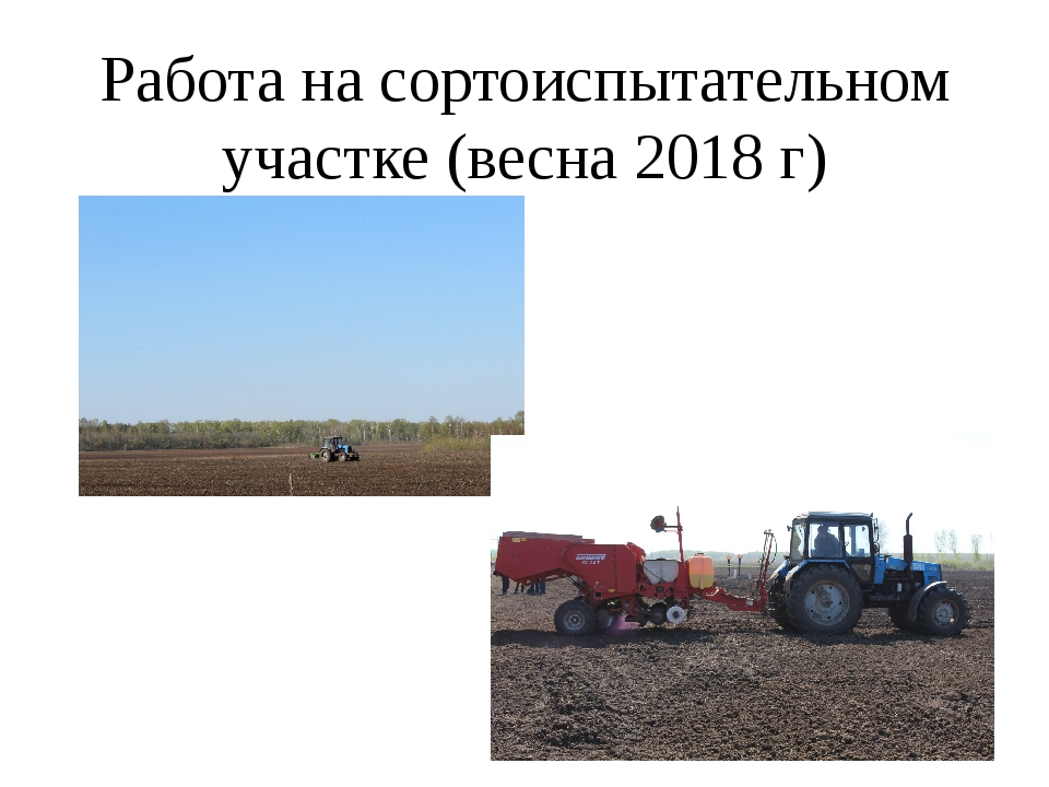 Работа на сортоиспытательном участке (весна 2018 г)