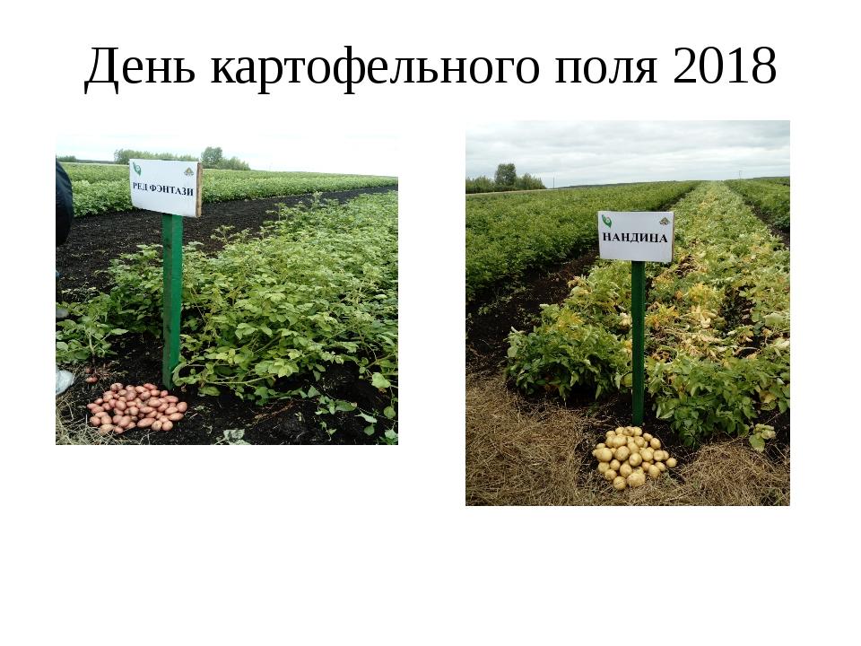 День картофельного поля 2018