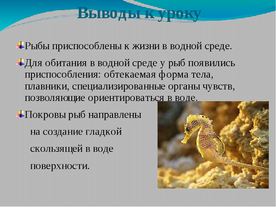 Выводы к уроку Рыбы приспособлены к жизни в водной среде. Для обитания в вод...