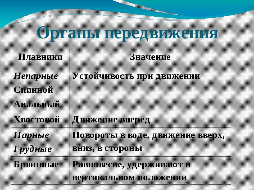 Органы передвижения Плавники Значение Непарные Спинной Анальный Устойчивость...
