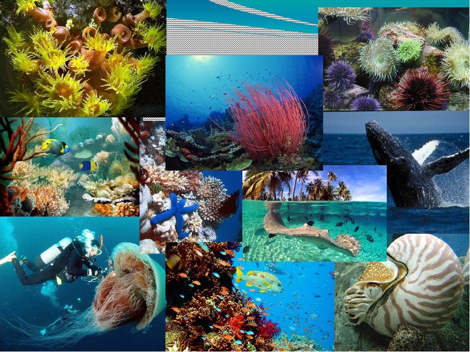 Картинки и фото китов в океане