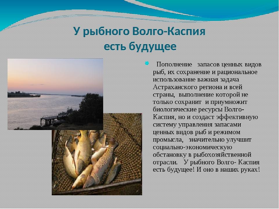 рекомендации, какие рыбы водятся в каспийском море фото малькольмом
