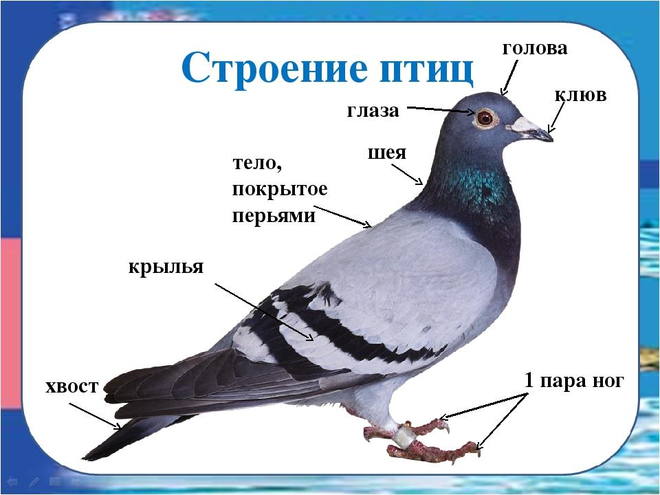 hello_html_24702fd5.jpg