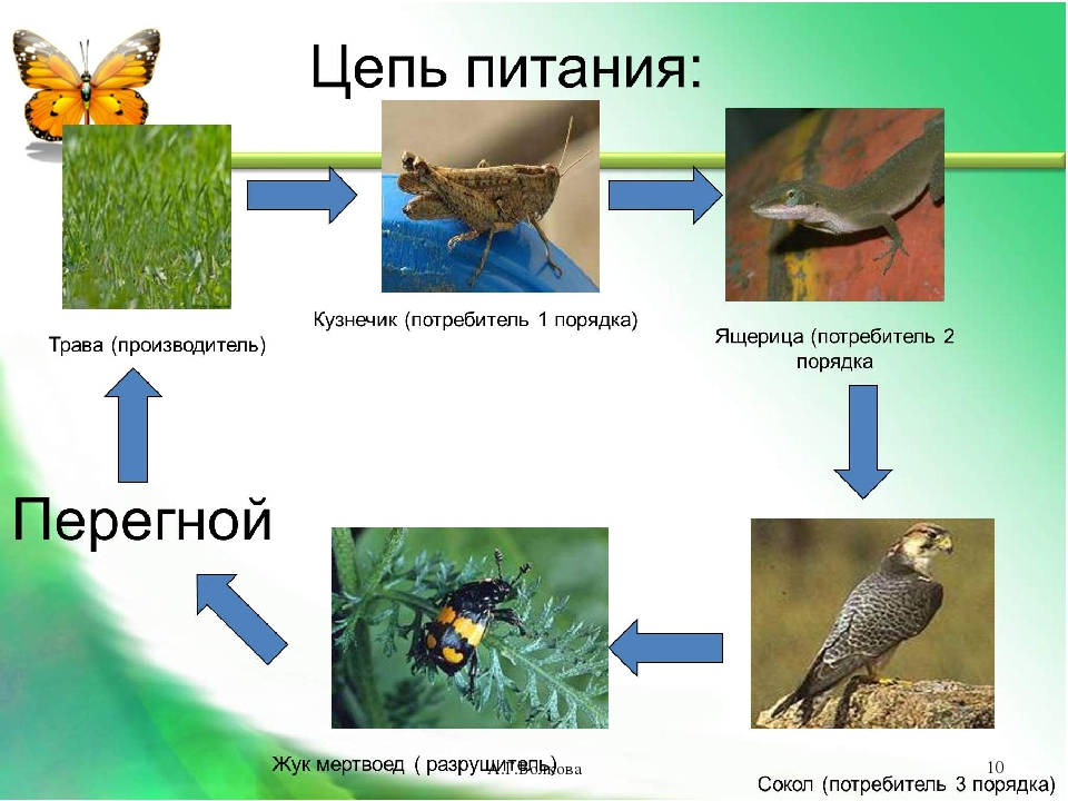 А.Г.Волкова * А.Г.Волкова