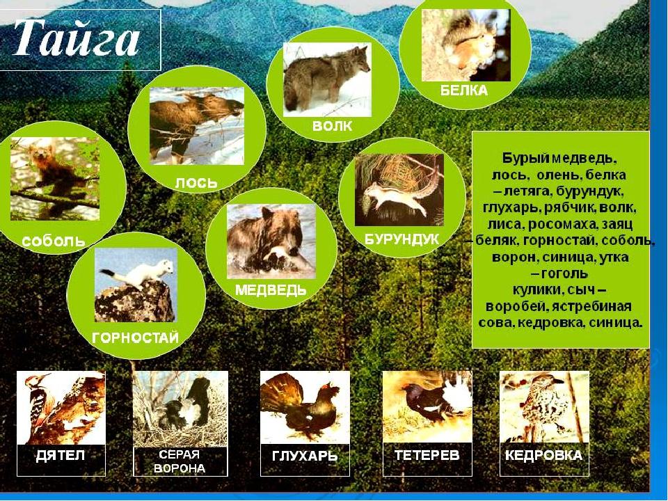картинки животных и растений природных зон другим легендам сойки