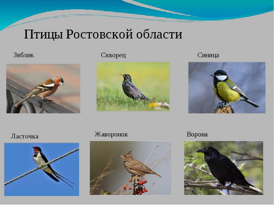 если птицы с картинками названиями ростовской области уникальный