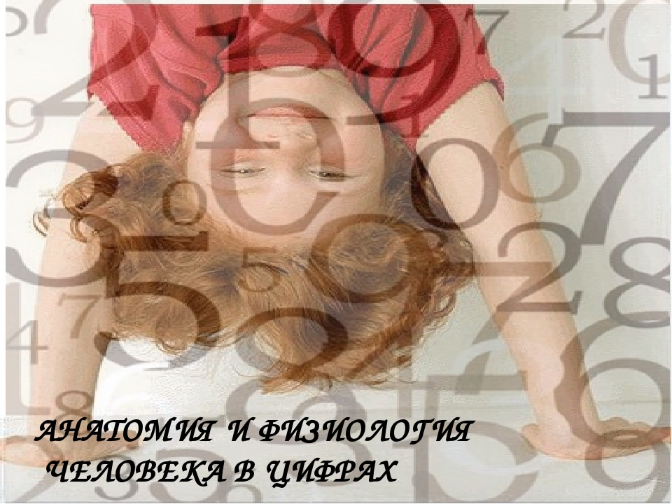 АНАТОМИЯ И ФИЗИОЛОГИЯ ЧЕЛОВЕКА В ЦИФРАХ