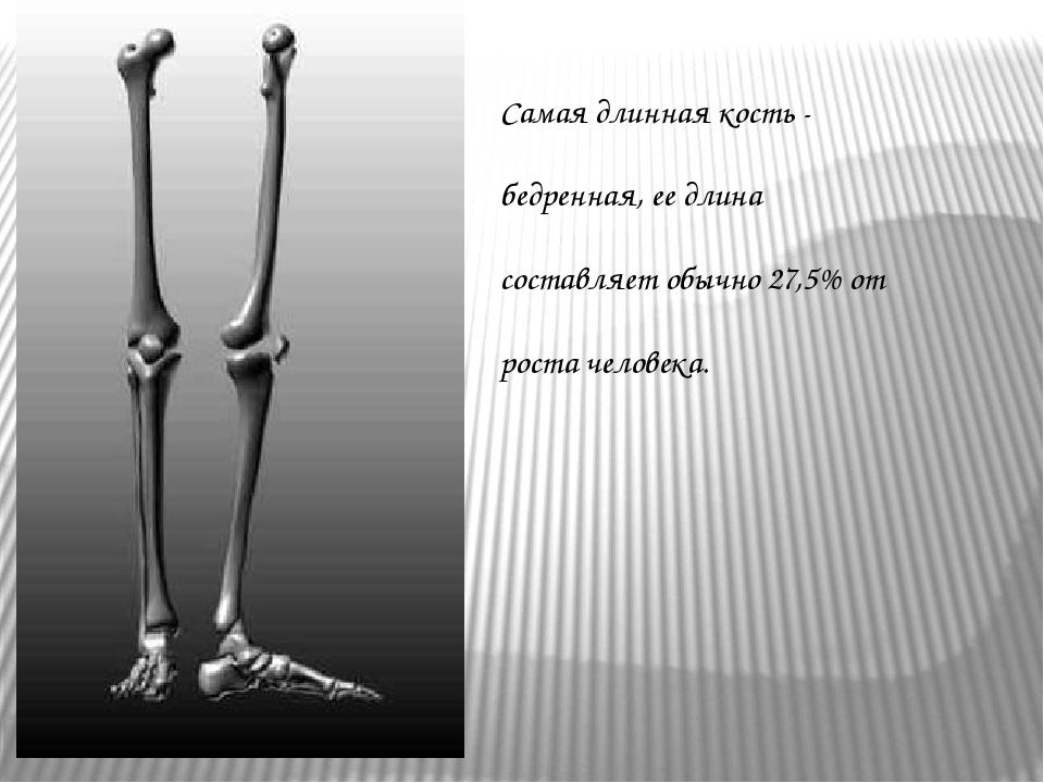 Самая длинная кость - бедренная, ее длина составляет обычно 27,5% от роста че...