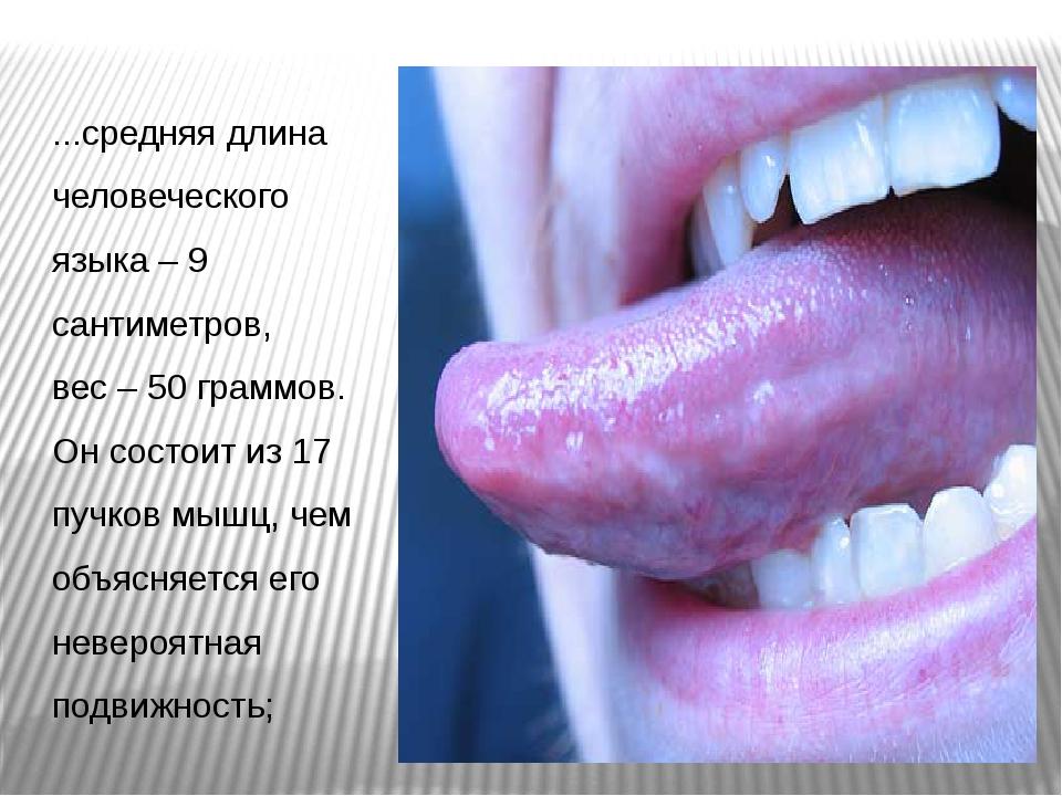 ...средняя длина человеческого языка – 9 сантиметров, вес – 50 граммов. Он со...