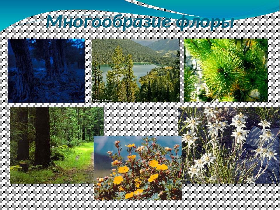флора россии кратко том