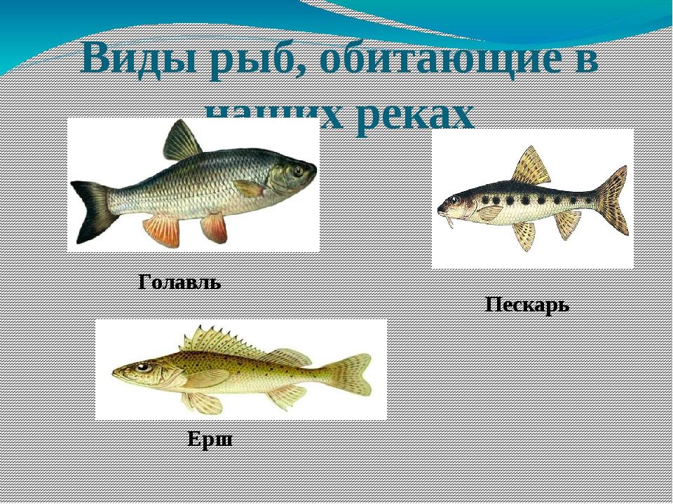 рыбы нижегородской области фото и названия конечно, здорово