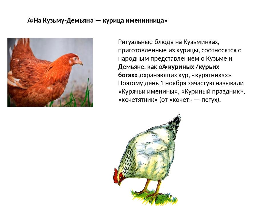 «На Кузьму-Демьяна — курица именинница» Ритуальные блюда на Кузьминках, приг...