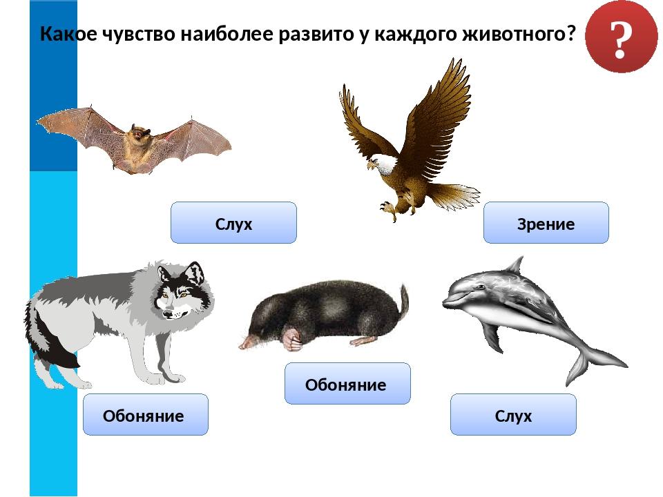 Какое чувство наиболее развито у каждого животного? ? Зрение Обоняние Обоняни...