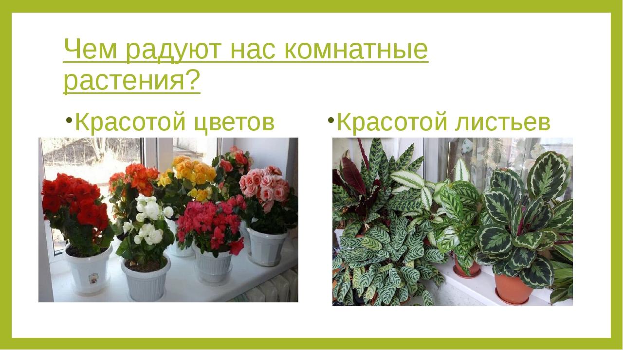 Чем радуют нас комнатные растения? Красотой цветов Красотой листьев