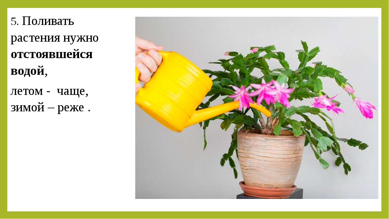 5. Поливать растения нужно отстоявшейся водой, летом - чаще, зимой – реже .