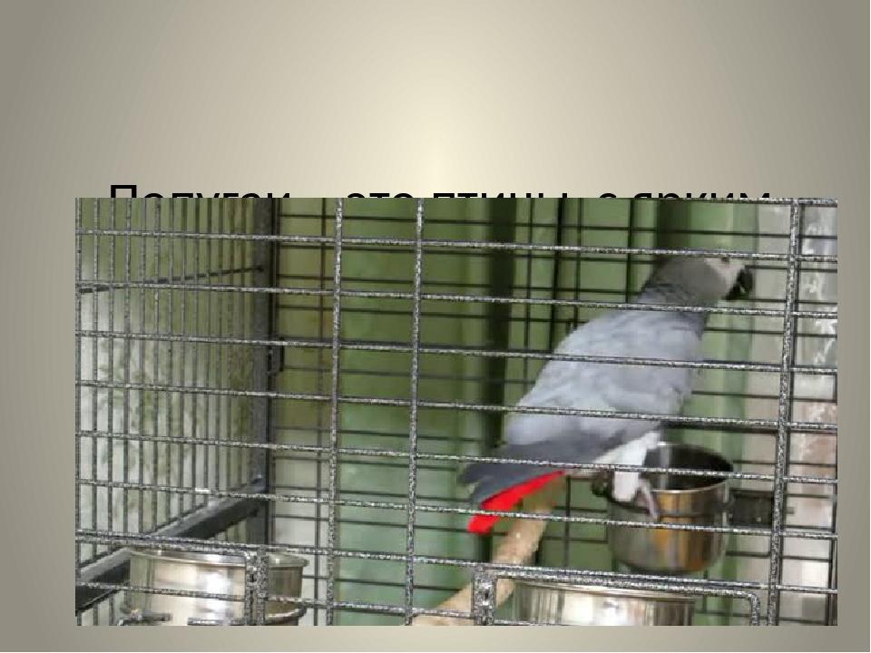 Попугаи - это птицы с ярким оперением, которые обитают в тропических лесах
