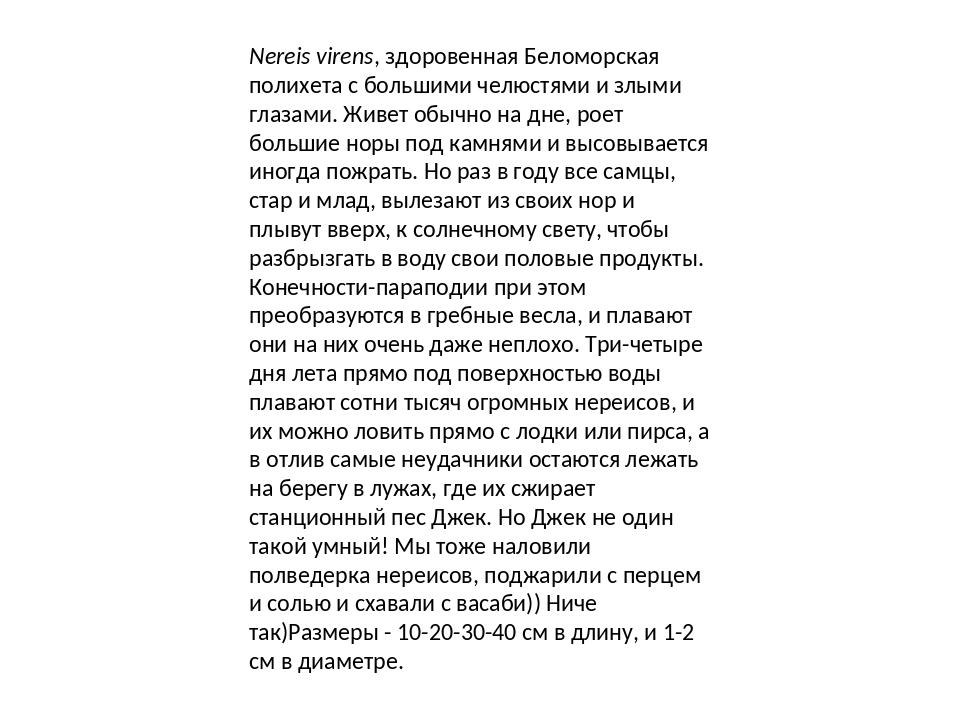 Nereis virens, здоровенная Беломорская полихета с большими челюстями и злыми...