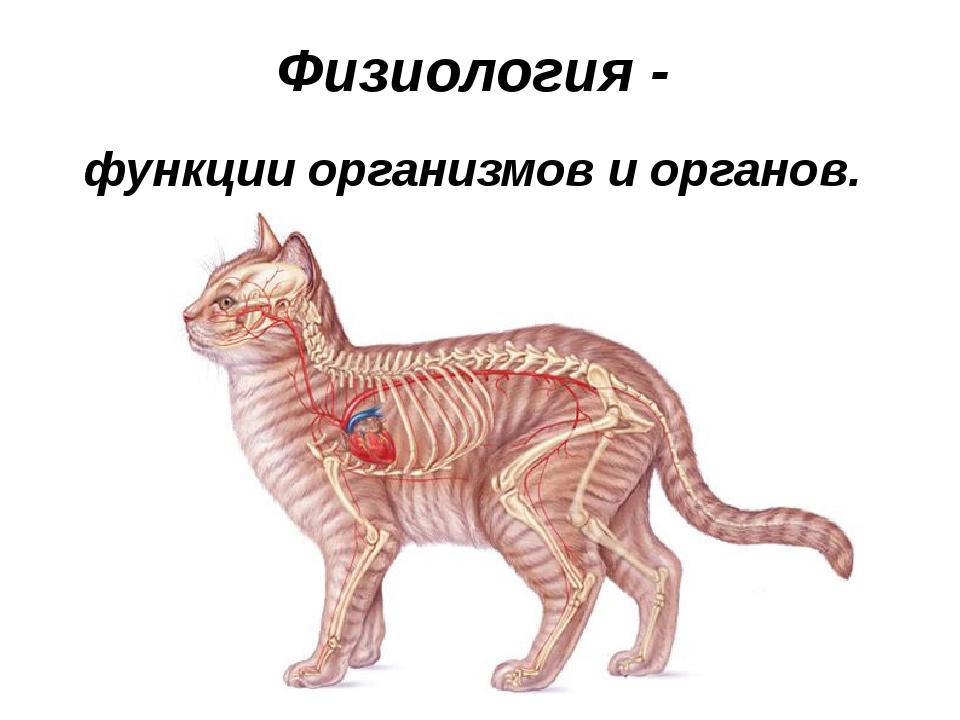 Физиология - функции организмов и органов.