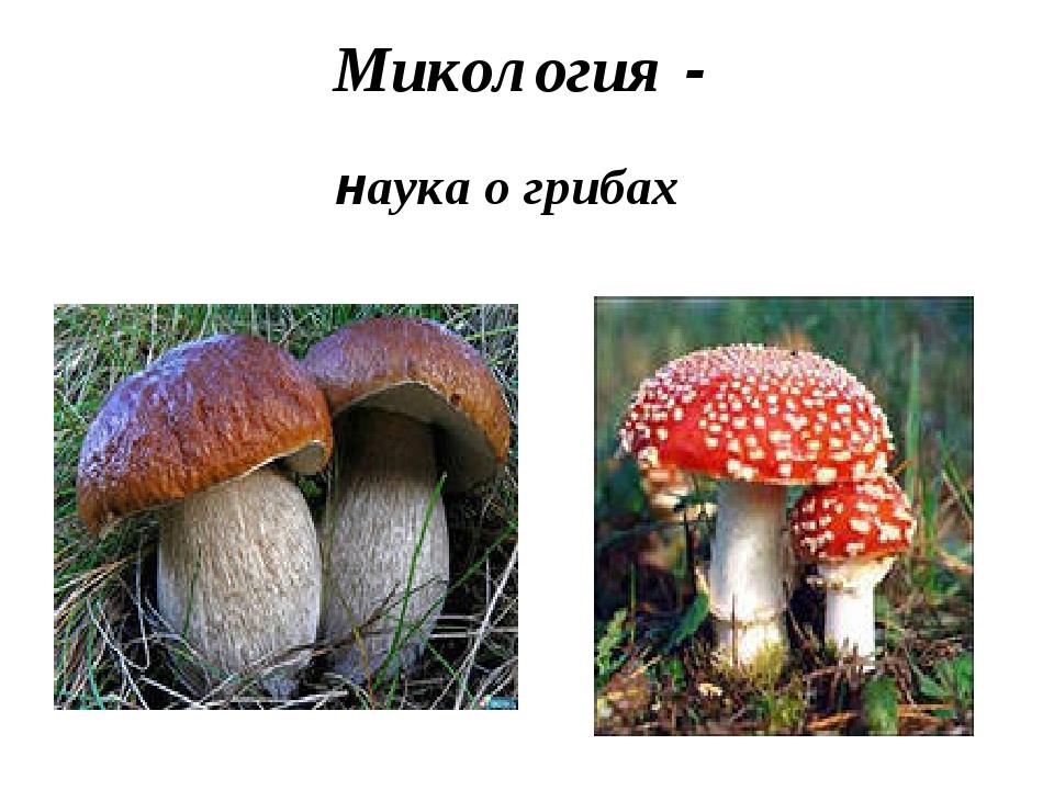 Микология - наука о грибах