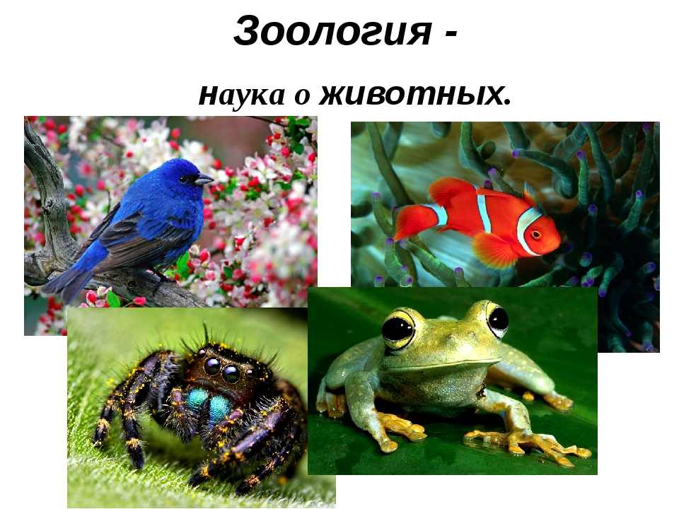 Зоология - наука о животных.