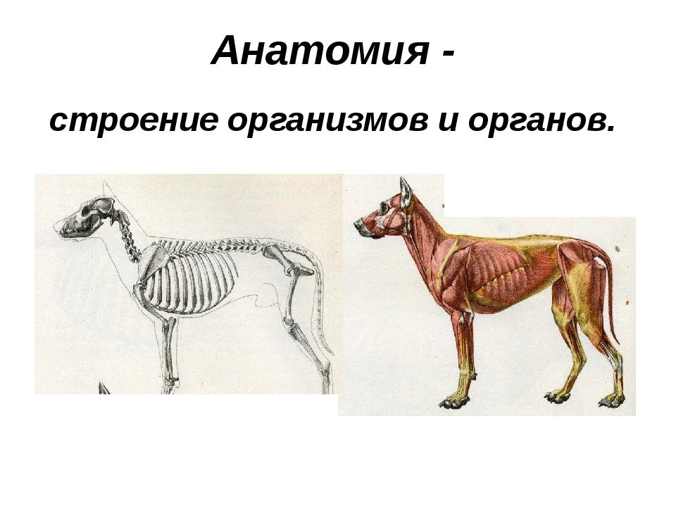 Анатомия - строение организмов и органов.