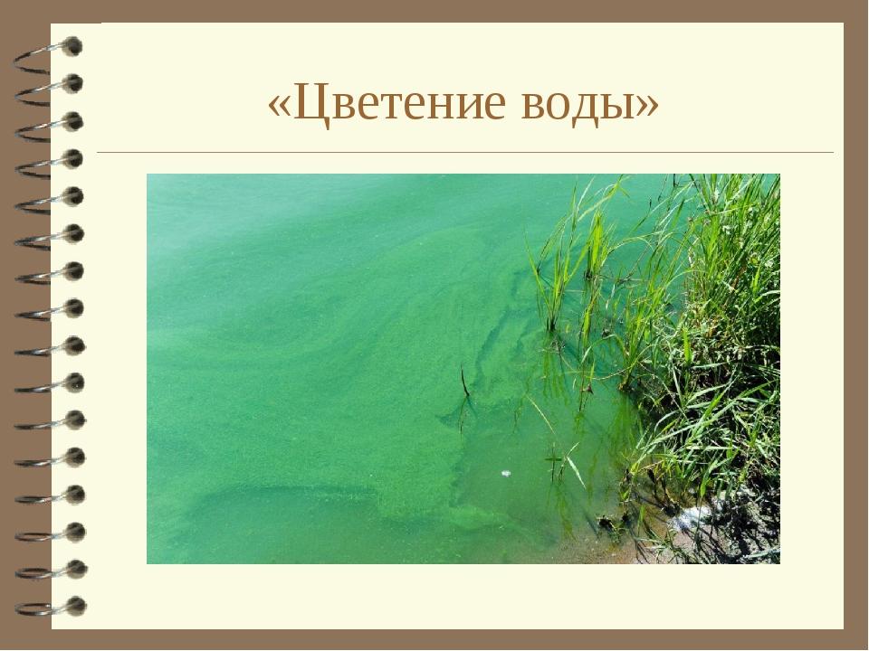 «Цветение воды»