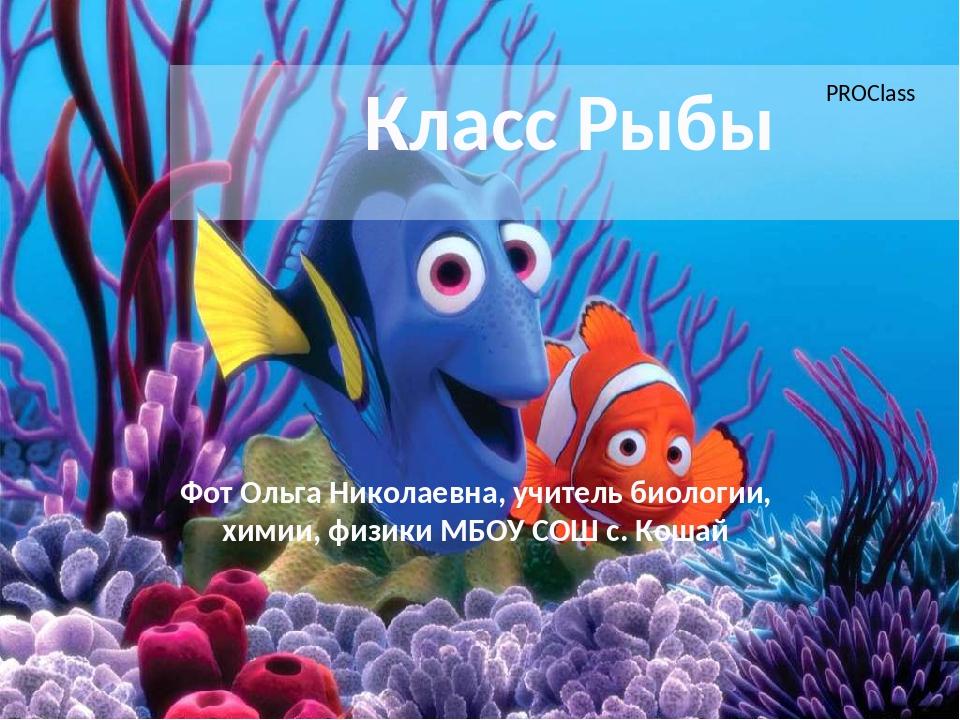 Класс Рыбы Фот Ольга Николаевна, учитель биологии, химии, физики МБОУ СОШ с....