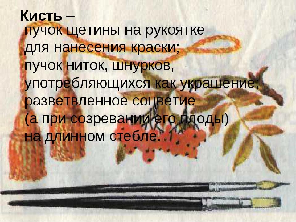 Кисть – пучок щетины на рукоятке для нанесения краски; пучок ниток, шнурков,...