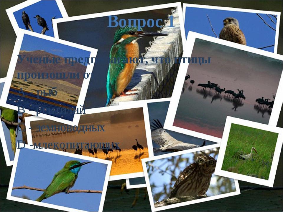 Вопрос 1 Ученые предполагают, что птицы произошли от A - рыб B - рептилий C -...