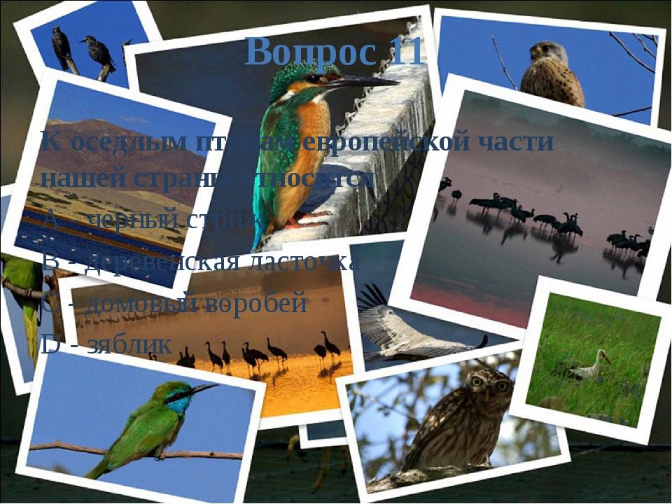 Вопрос 11 К оседлым птицам европейской части нашей страны относится A - черны...