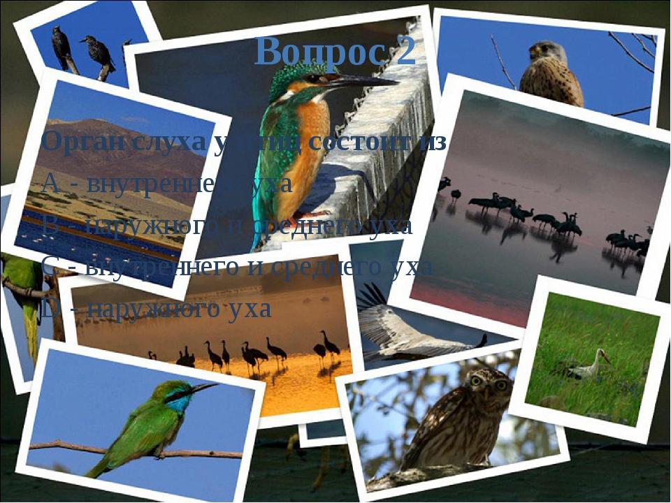 Вопрос 2 Орган слуха у птиц состоит из A - внутреннего уха B - наружного и ср...