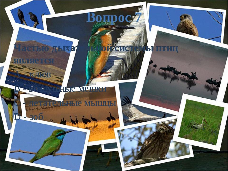 Вопрос 7 Частью дыхательной системы птиц является A - клюв B - воздушные мешк...