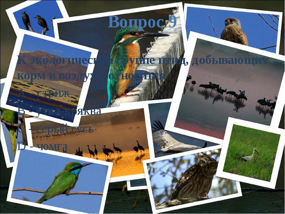 Вопрос 9 К экологической группе птиц, добывающих корм в воздухе, относится A...