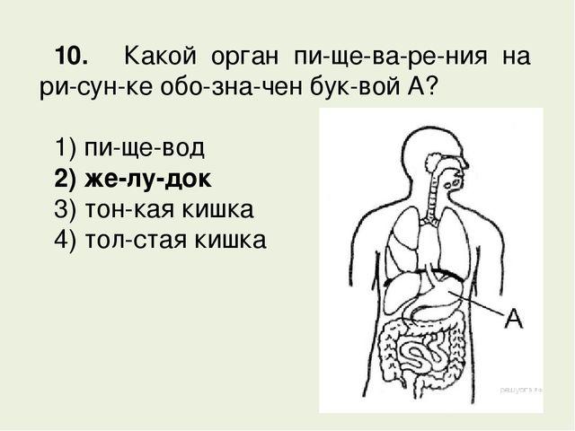 Ядовитые вещества попавшие в организм обезвреживаються в почках или печени