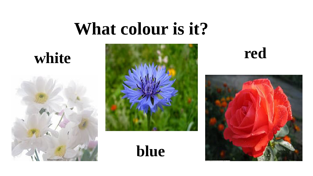 red What colour is it? blue white