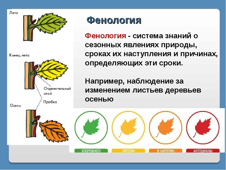 Фенология Фенология - система знаний о сезонных явлениях природы, сроках их н...