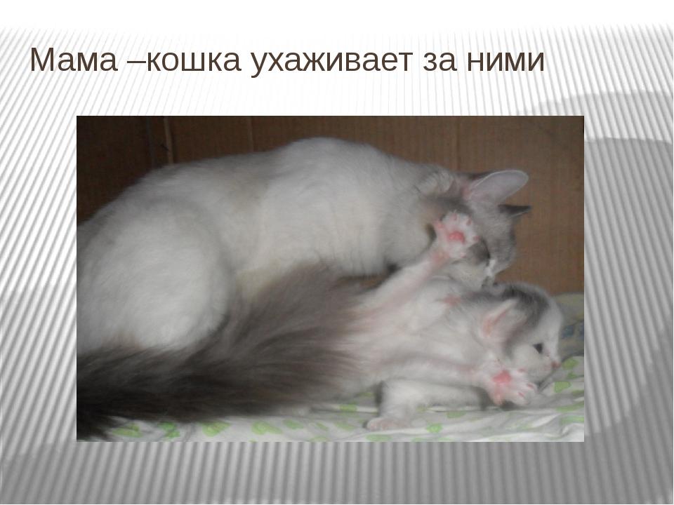 Мама –кошка ухаживает за ними