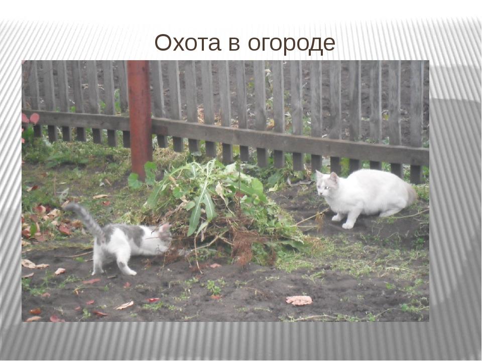 Охота в огороде