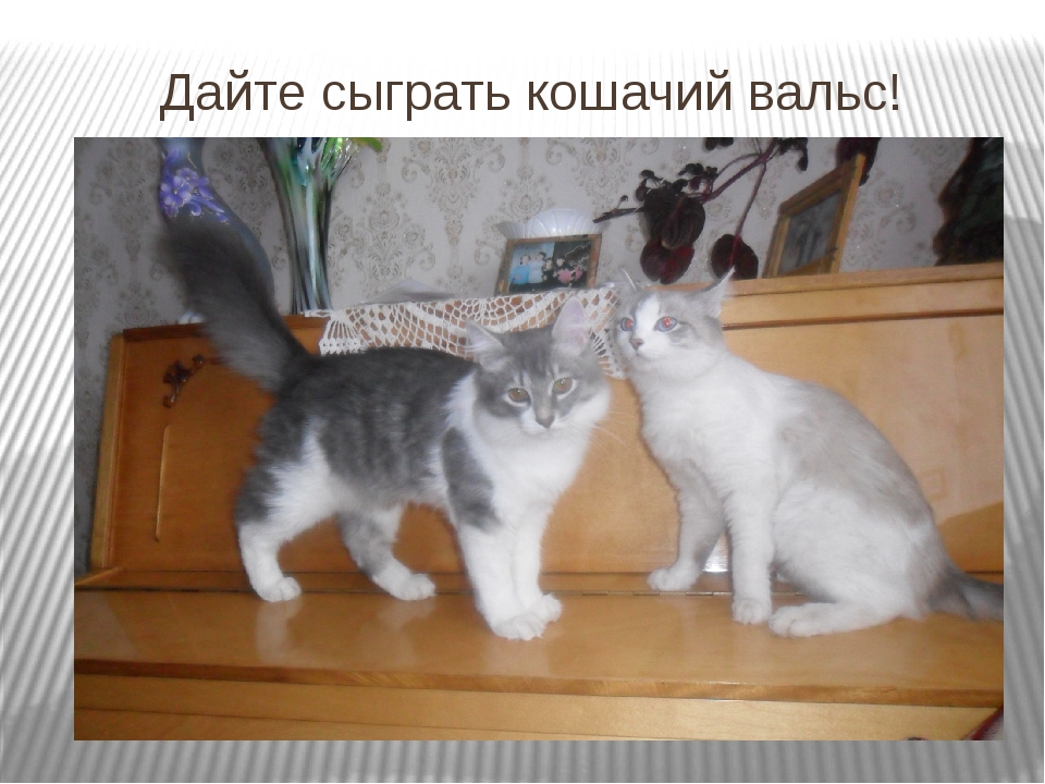 Дайте сыграть кошачий вальс!