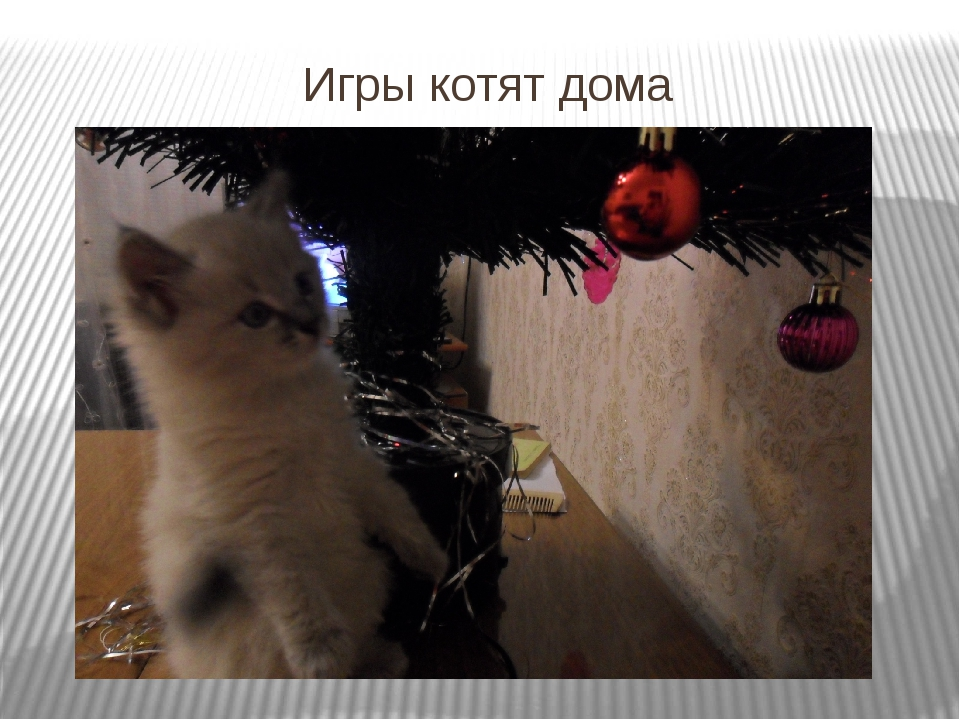 Игры котят дома