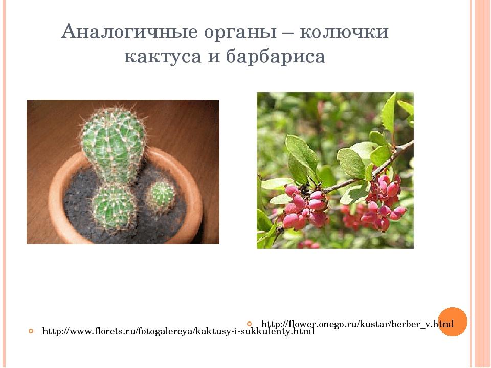 Аналогичные органы – колючки кактуса и барбариса http://flower.onego.ru/kusta...
