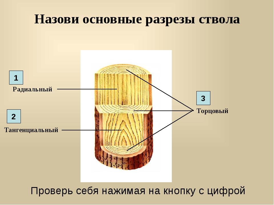 Назови основные разрезы ствола Радиальный Торцовый Тангенциальный 1 2 3 Прове...