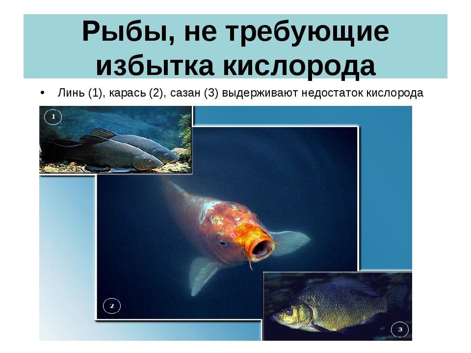 Рыбы, не требующие избытка кислорода Линь (1), карась (2), сазан (3) выдержив...