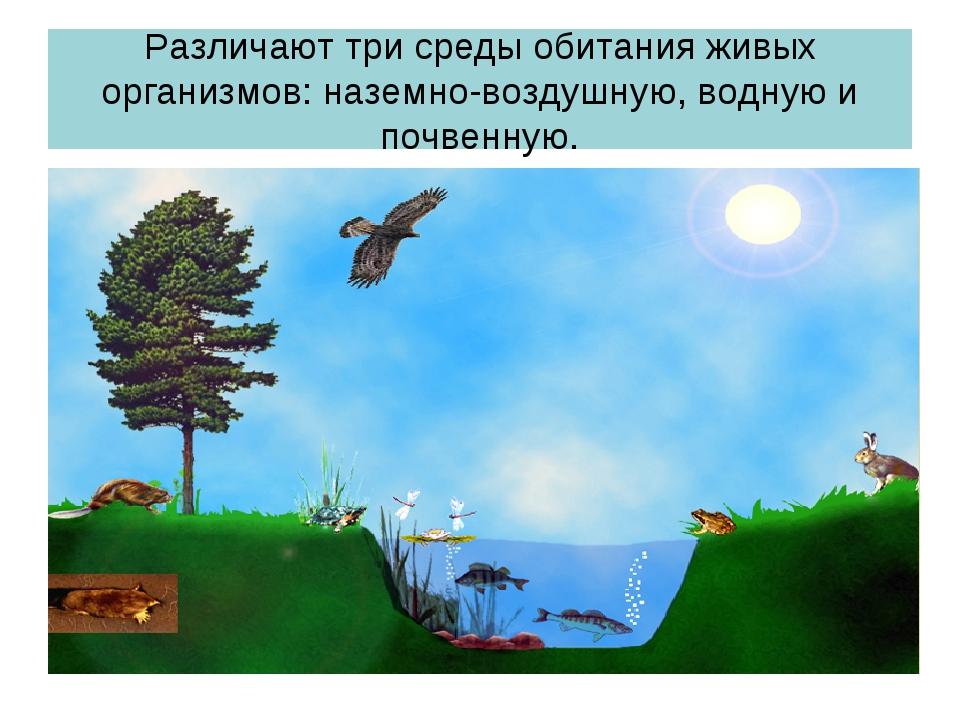 Различают три среды обитания живых организмов: наземно-воздушную, водную и по...