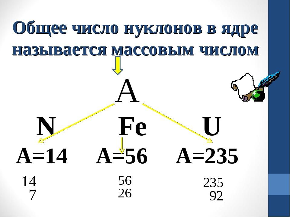 Общее число нуклонов в ядре называется массовым числом А N Fe U А=14 A=56 A=235