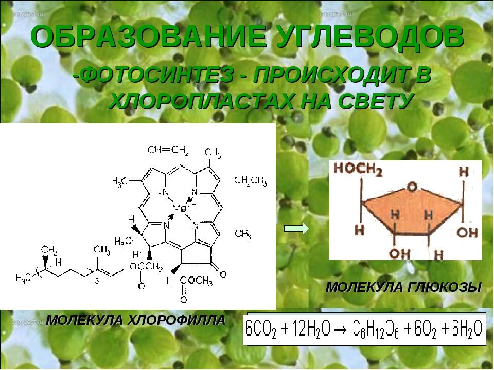 республики фотосинтез образует углеводы семья