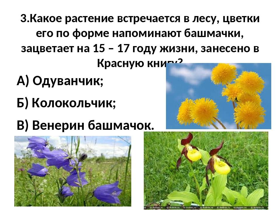 3.Какое растение встречается в лесу, цветки его по форме напоминают башмачки,...